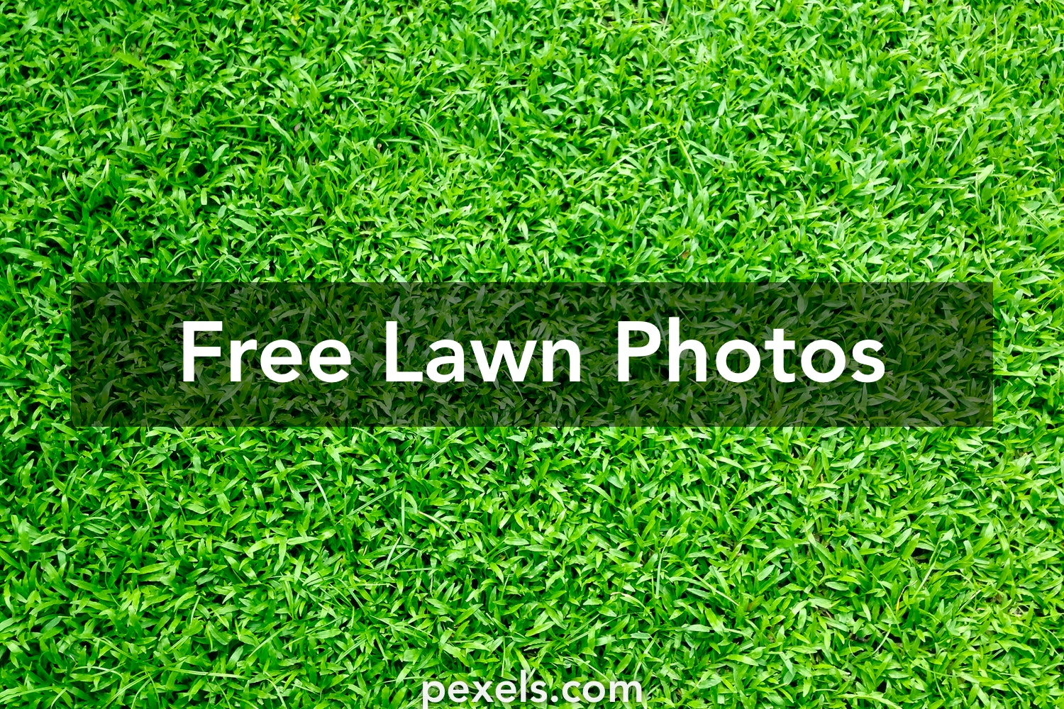 500 great lawn photos pexels free stock photos