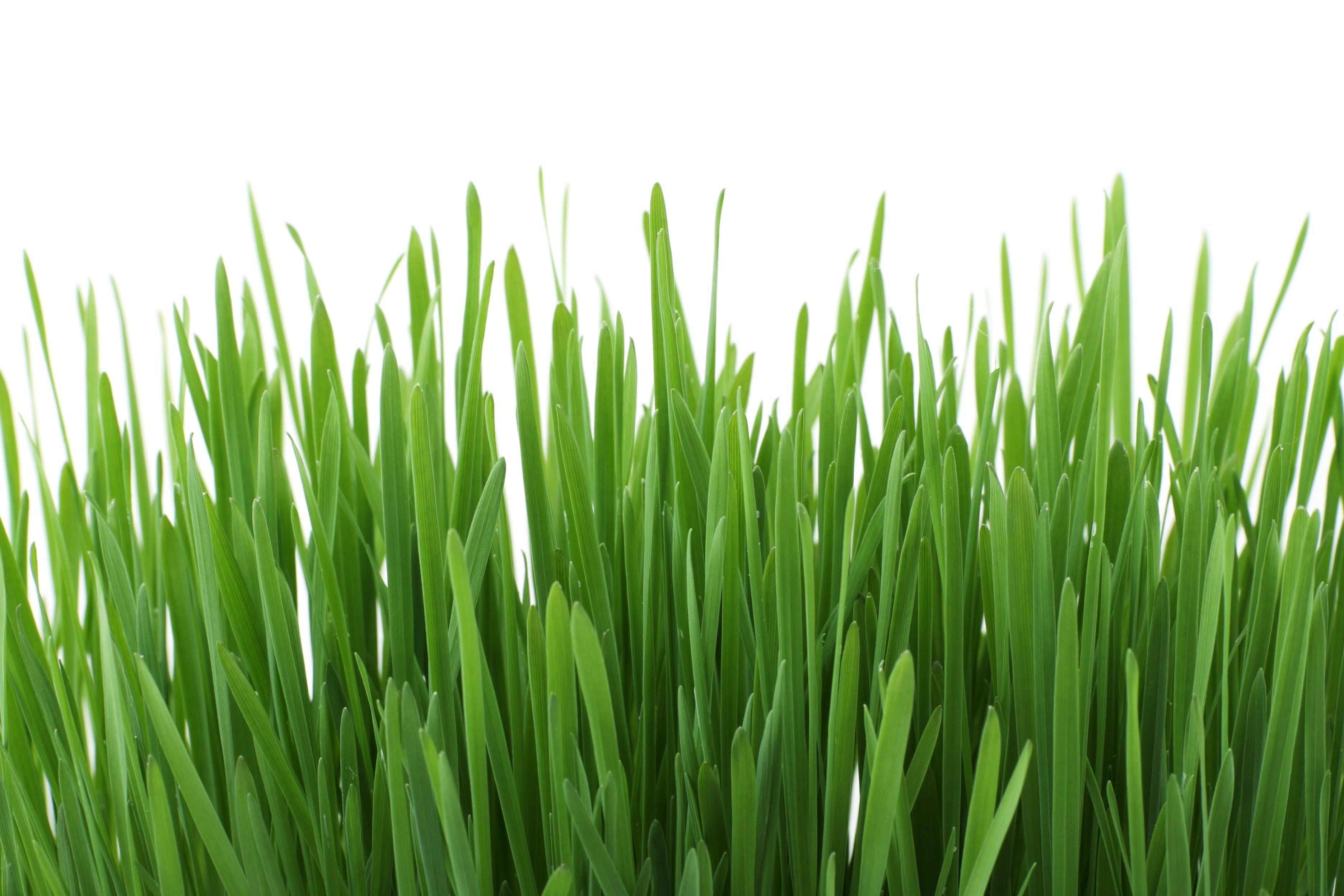 Fotos de stock gratuitas de césped, crecimiento, flora, Fresco