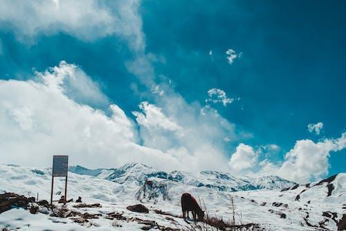 Free stock photo of mountain, mule, mustang
