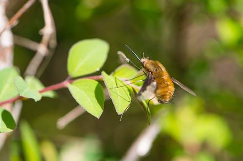 Free stock photo of insekt, insektenfotografie, makroaufnahme