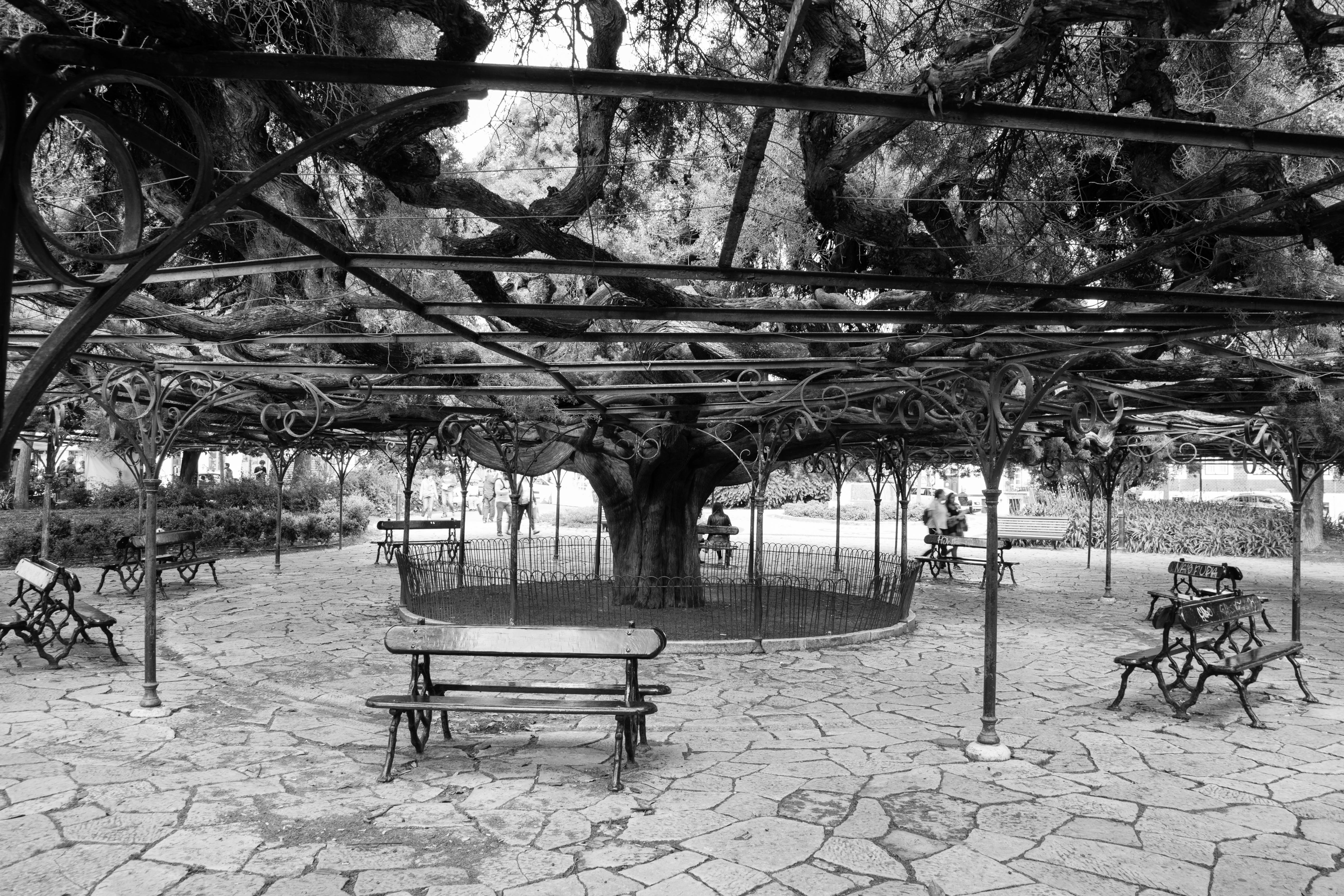 of bench, black and white, Lisbon, parc