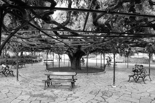 Immagine gratuita di albero, Lisbona, panchina, parc