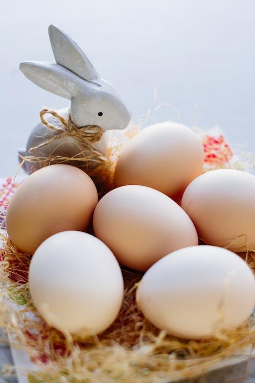 Gratis arkivbilde med egg, eggeskall, ernæring, ferie
