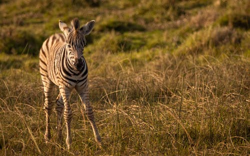 Free stock photo of africa, african wildlife, beauty in nature, game drive