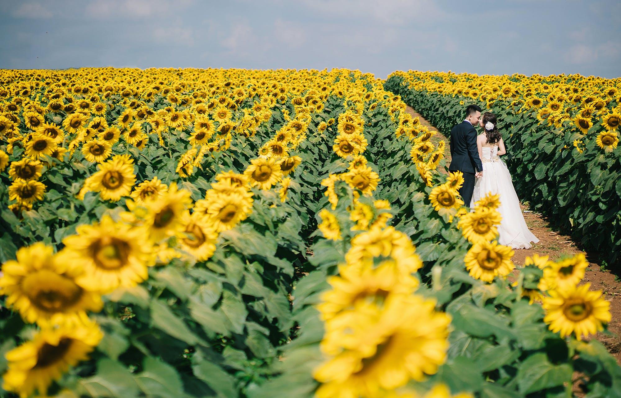 Free stock photo of sky, love, garden, yellow