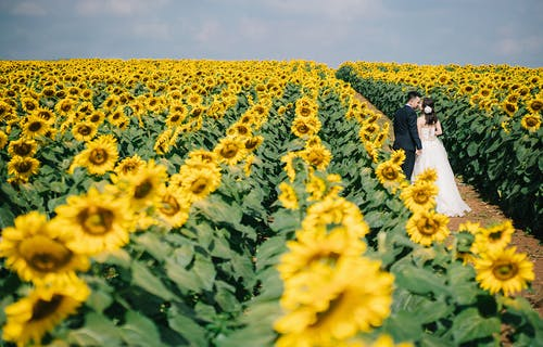 Free stock photo of analog camera, beautiful flowers, couple walking, flower garden