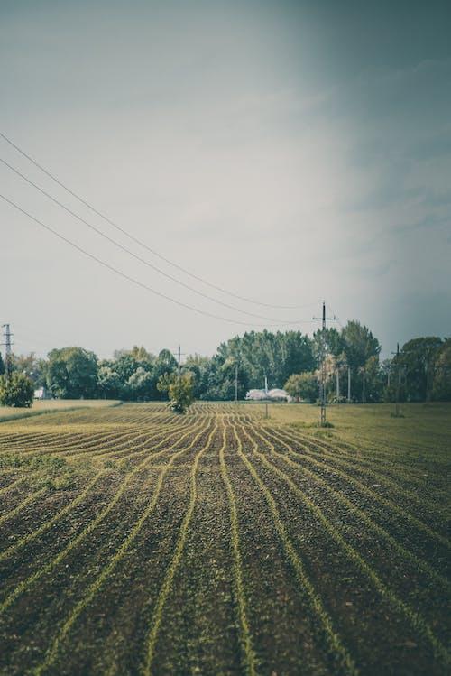 Plantation with furrows on farmland under sky
