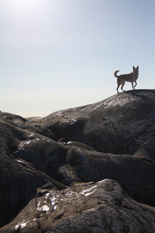 คลังภาพถ่ายฟรี ของ ดวงอาทิตย์, สุนัข, หิน, แดด