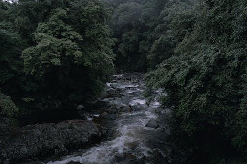 Fotobanka sbezplatnými fotkami na tému cestovať, dážď, dažďový prales, denné svetlo