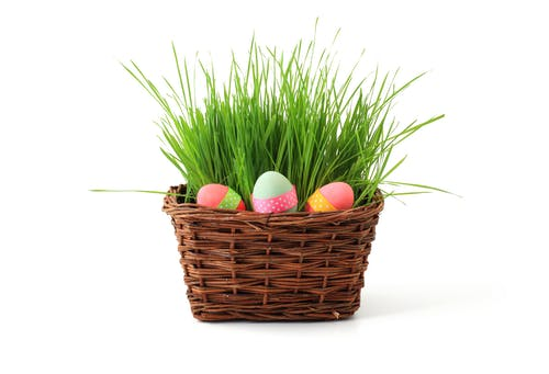 Gratis arkivbilde med egg, fargerik, gress, påske