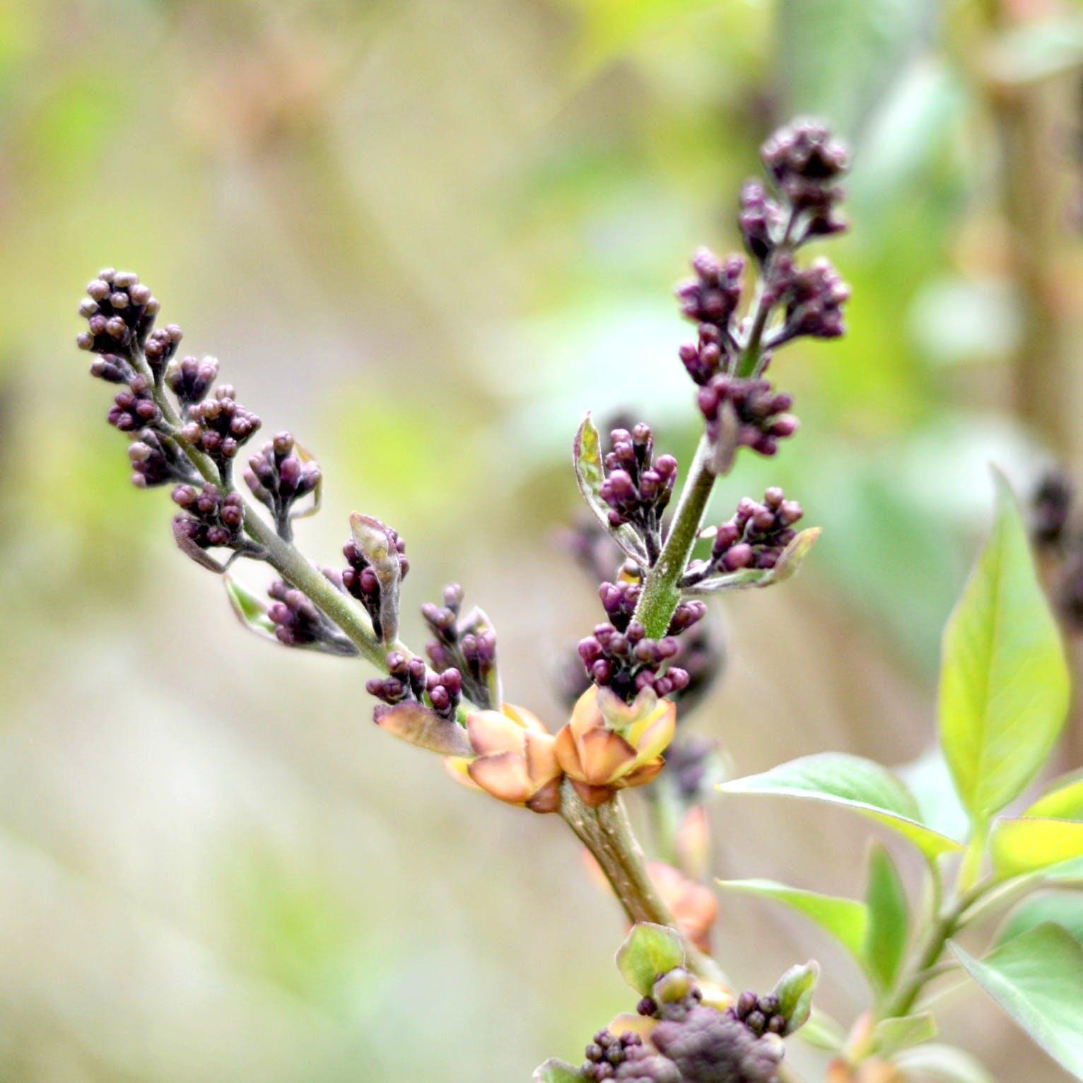 Free stock photo of purple, spring, flower, bloom