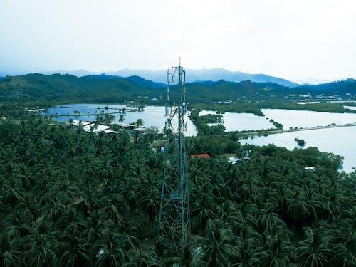 Free stock photo of dark green plants, satellite, tower