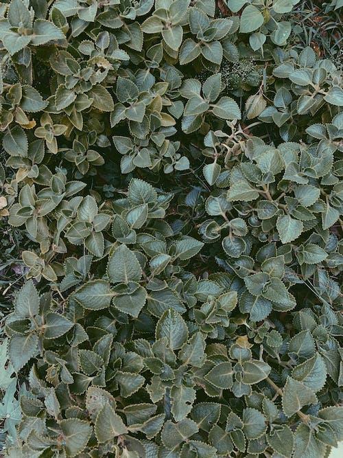 Free stock photo of dark green, garden, green