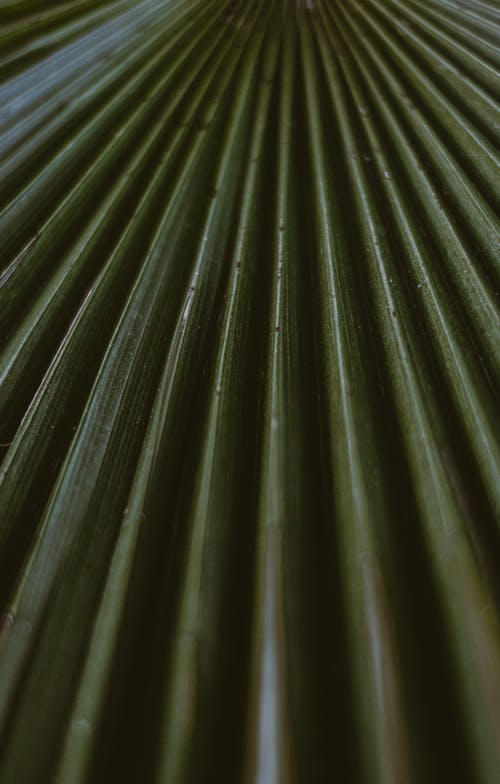 Abstract background of green plant leaves