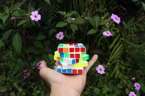 Free stock photo of lovely, nature, romantic, rubik's cube