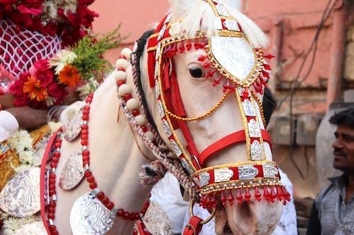 Free stock photo of horse, wedding horse, white horse