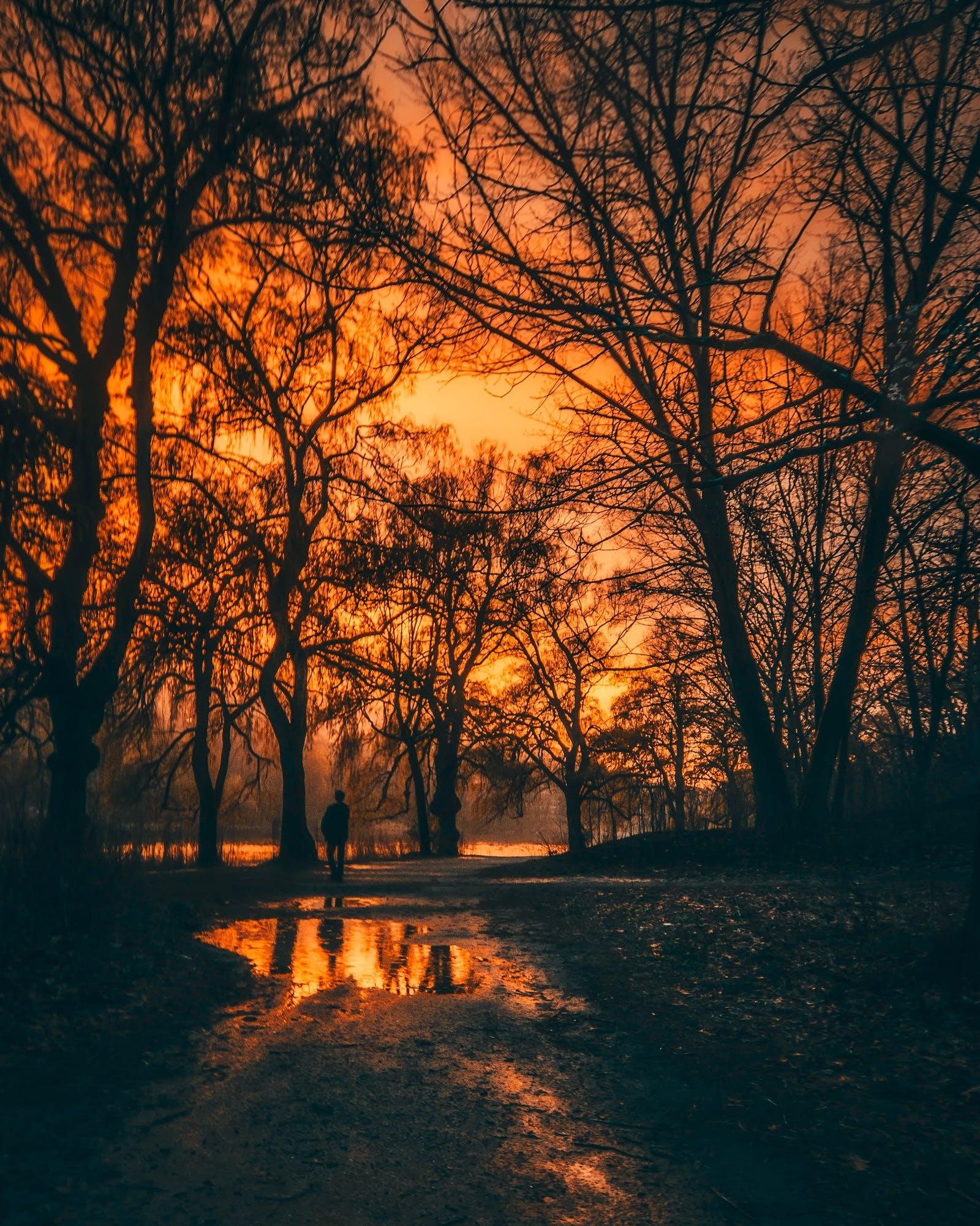 Kostenloses Stock Foto zu abend, außerorts, bäume, dämmerung