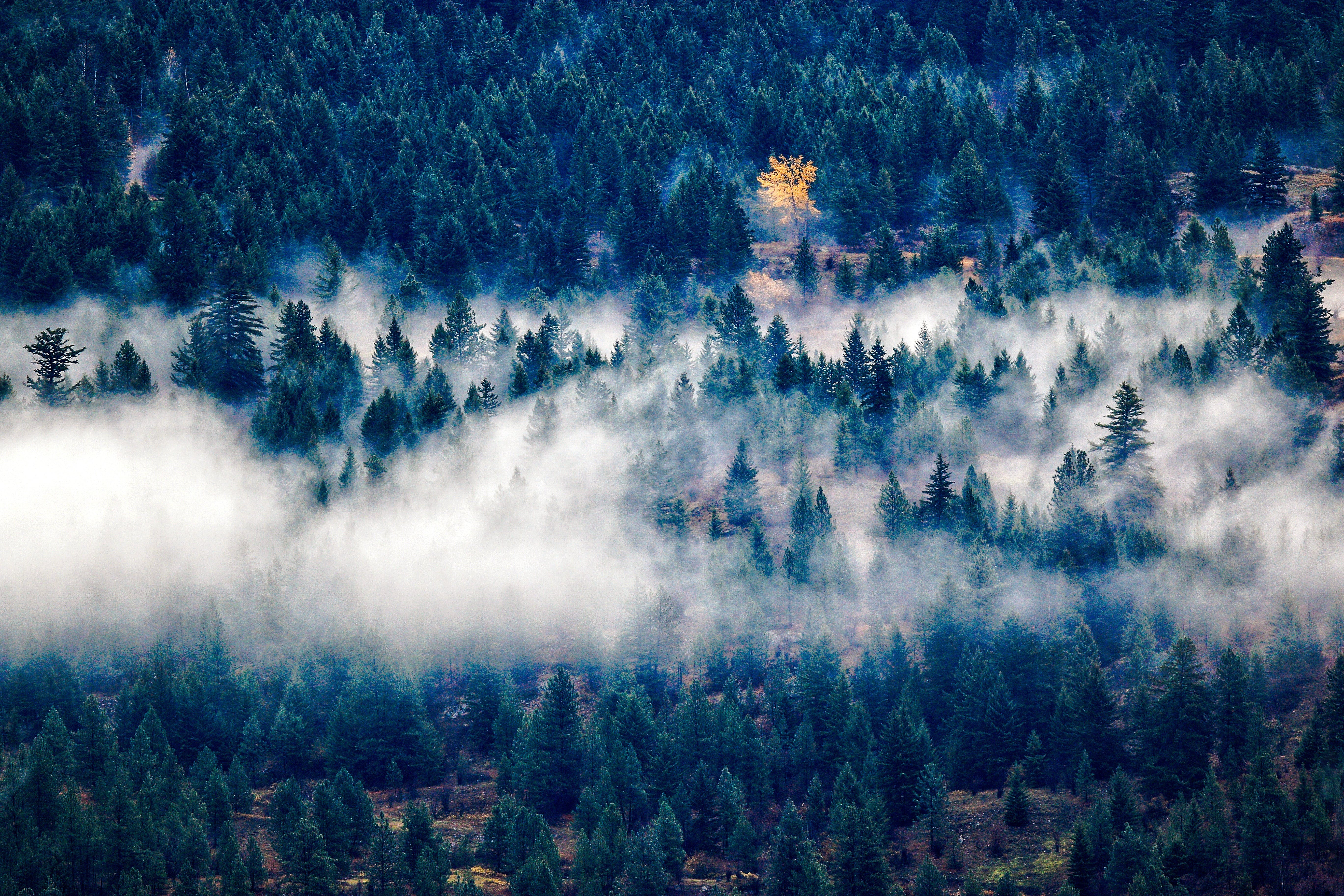 Green Forest Surrounded by Fog