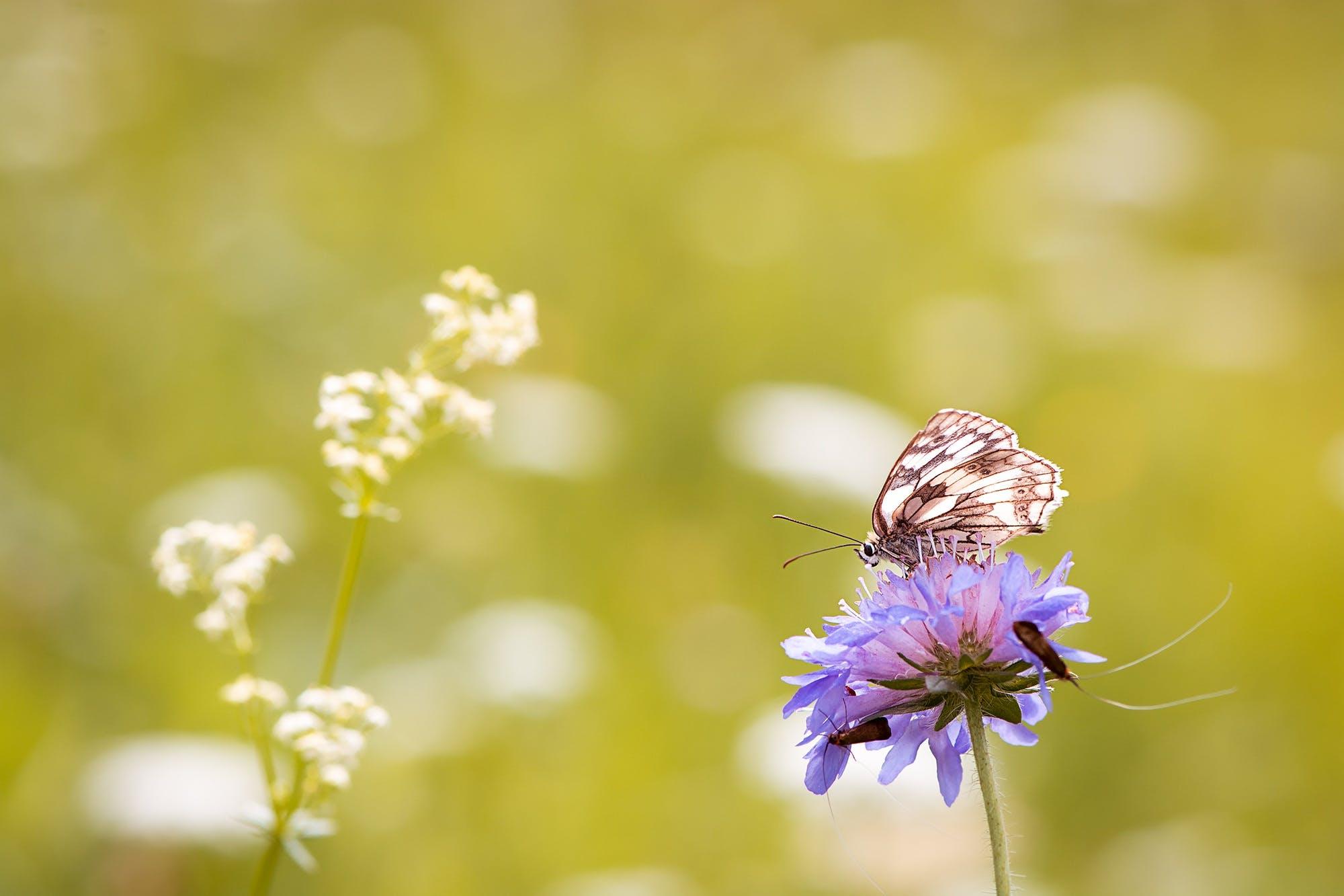 animal, beautiful, bloom