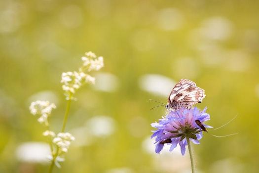 Free stock photo of nature, field, summer, garden