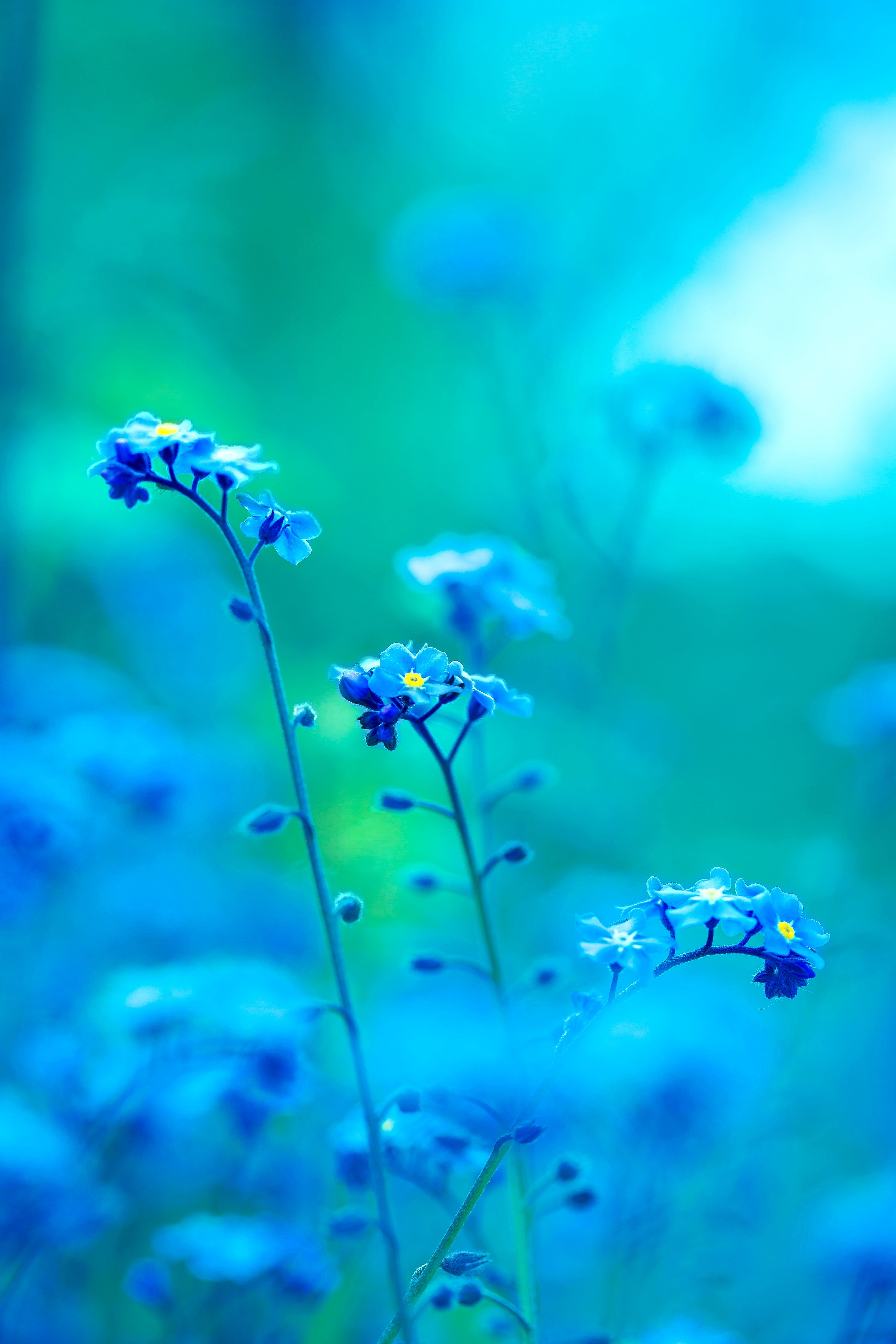 Free stock photo of light, nature, flowers, blue