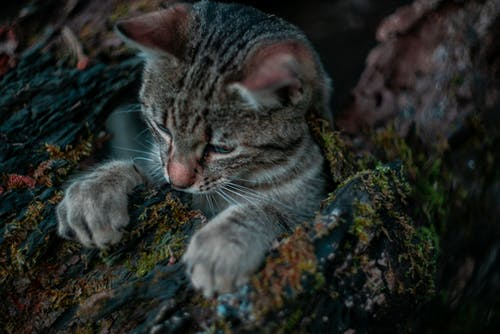 Free stock photo of animal, cat, forest