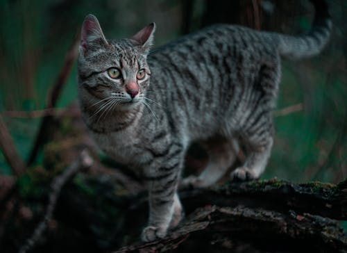 Silver Tabby Cat on Brown Tree Log