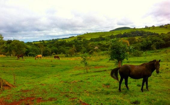 Free stock photo of mountains, field, trees, farm