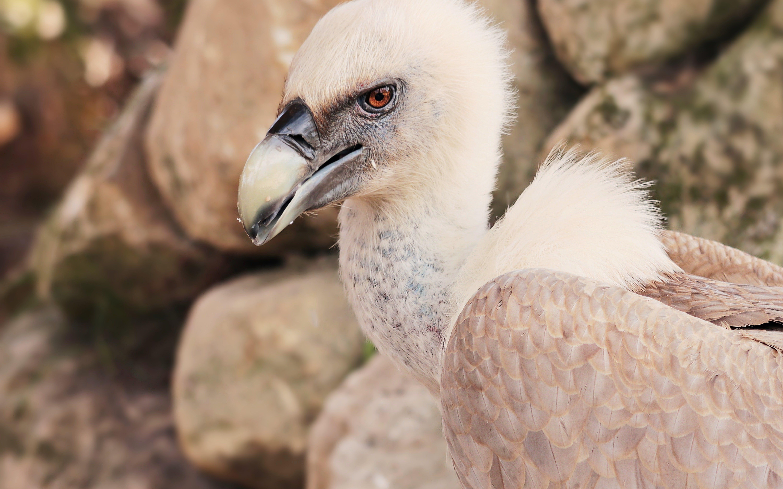 Free stock photo of nature, bird, animal, zoo