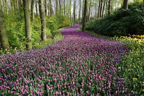Бесплатное стоковое фото с весна, заводы, красивый, лепестки