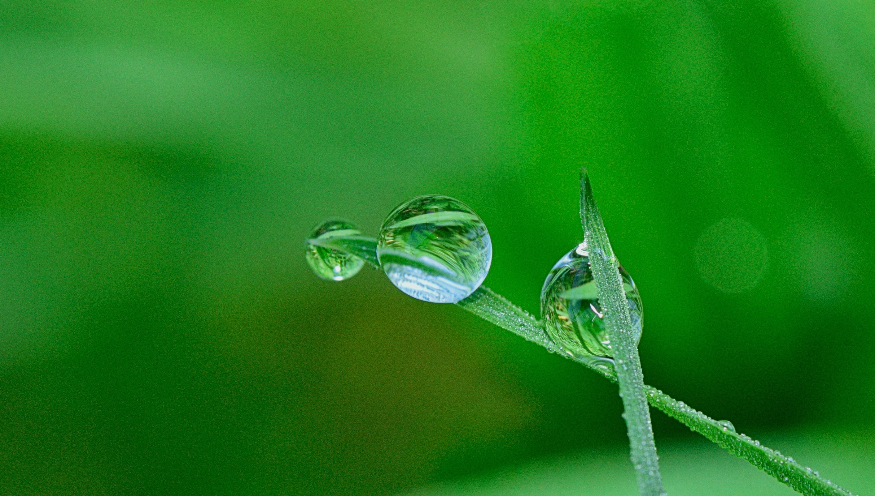 Green Grass and Water Droplet