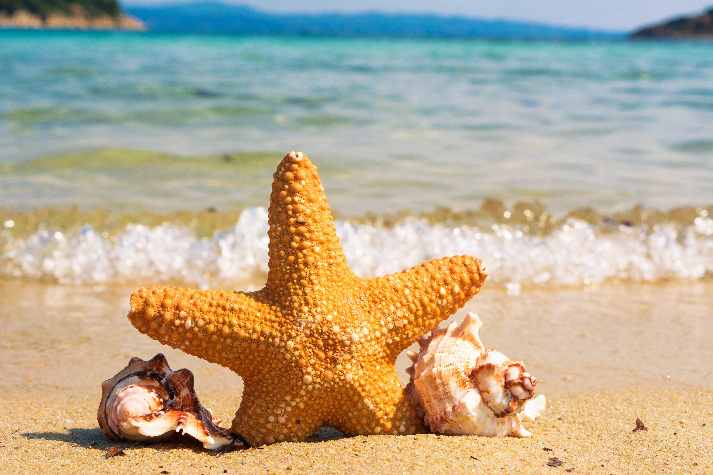 Selective Focus of Starfish Between Shells on Seashore