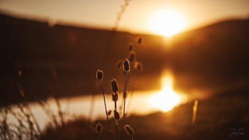 คลังภาพถ่ายฟรี ของ ซิก, ดู, ตะวันลับฟ้า, ตะวันสีทอง
