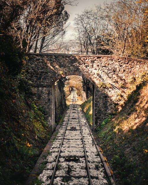 Gratis lagerfoto af blad, bro, efterår, falde