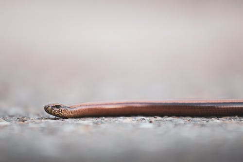 Brown and Black Snake on White Sand