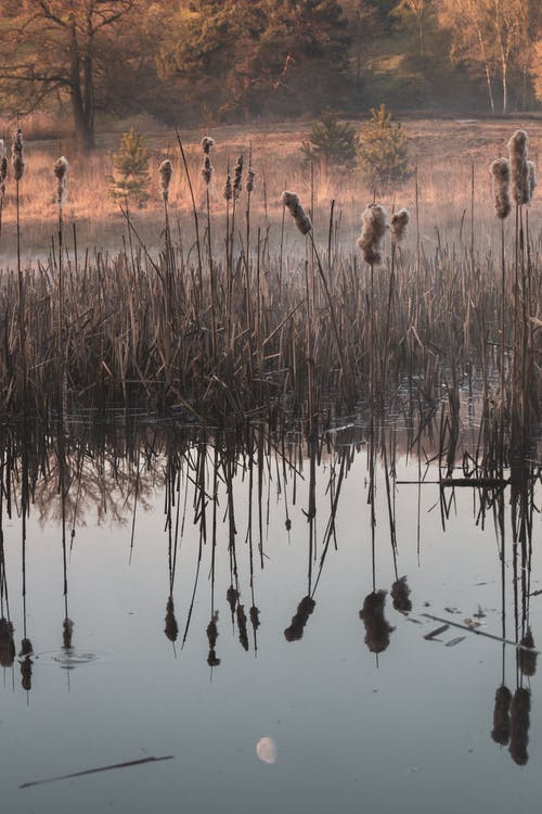 Brown Grass on Water