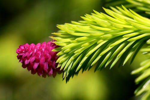 Foto d'estoc gratuïta de desenfocament, flor, flora, Fons de pantalla HD