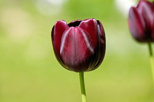 Základová fotografie zdarma na téma barva, botanický, červená, flóra