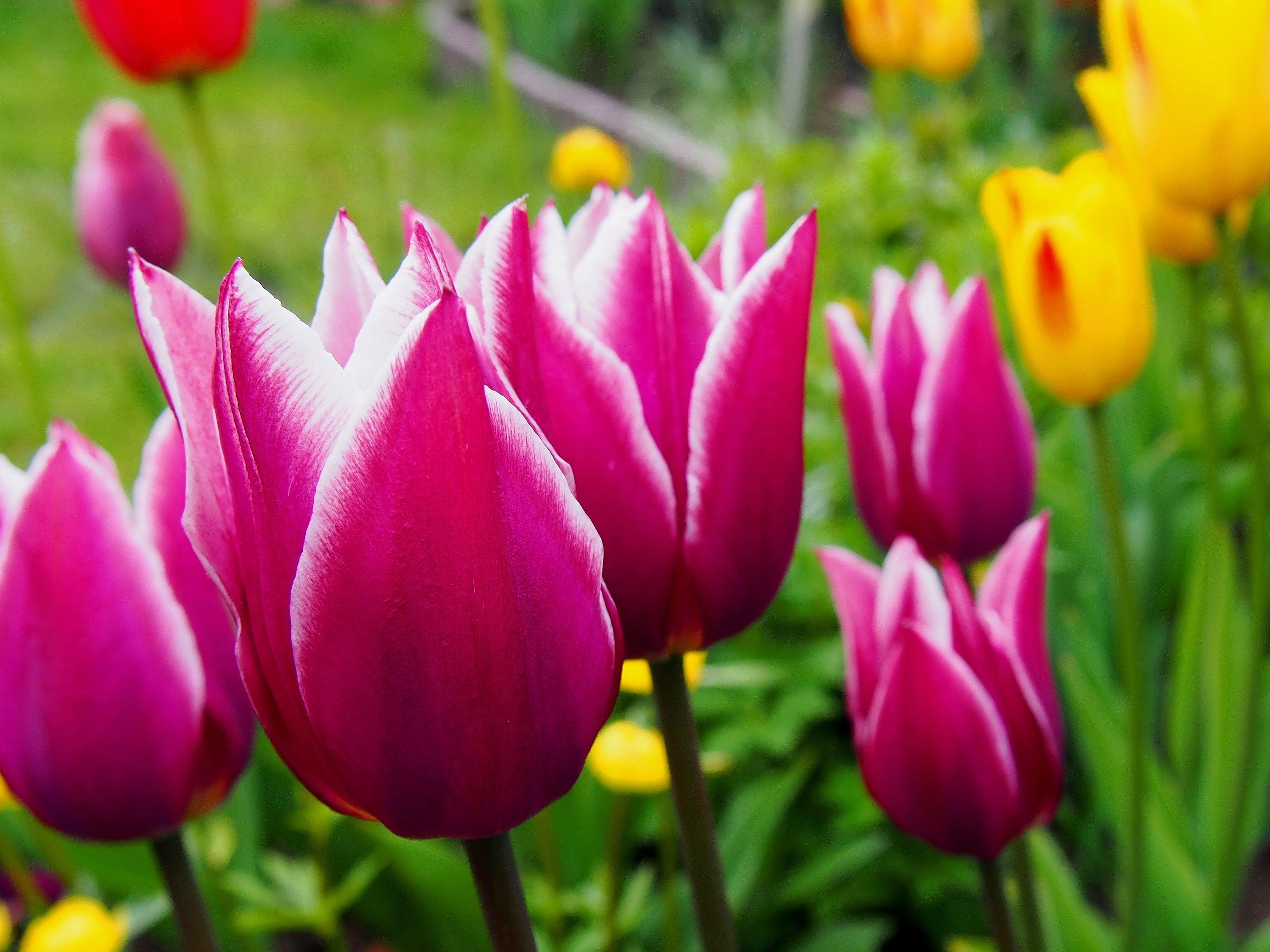 Gratis lagerfoto af blomster, blomstrende, close-up, delikat