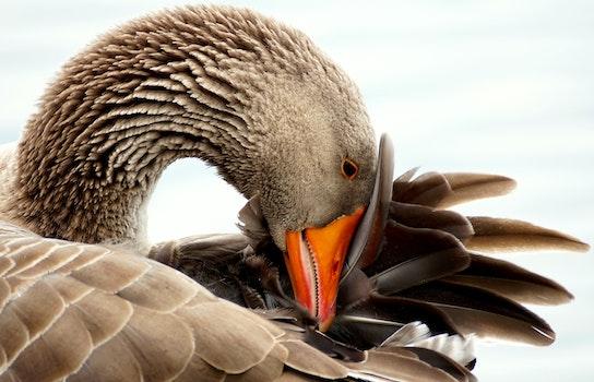 Free stock photo of bird, animal, beak, reflection