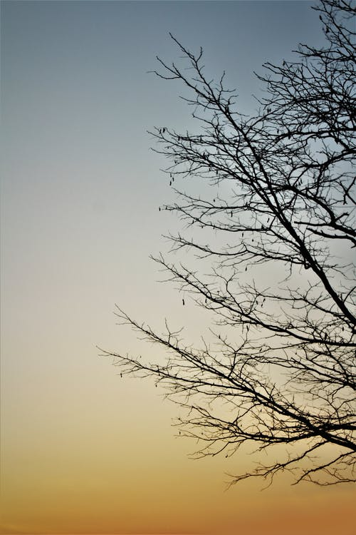 Foto profissional grátis de árvore morta