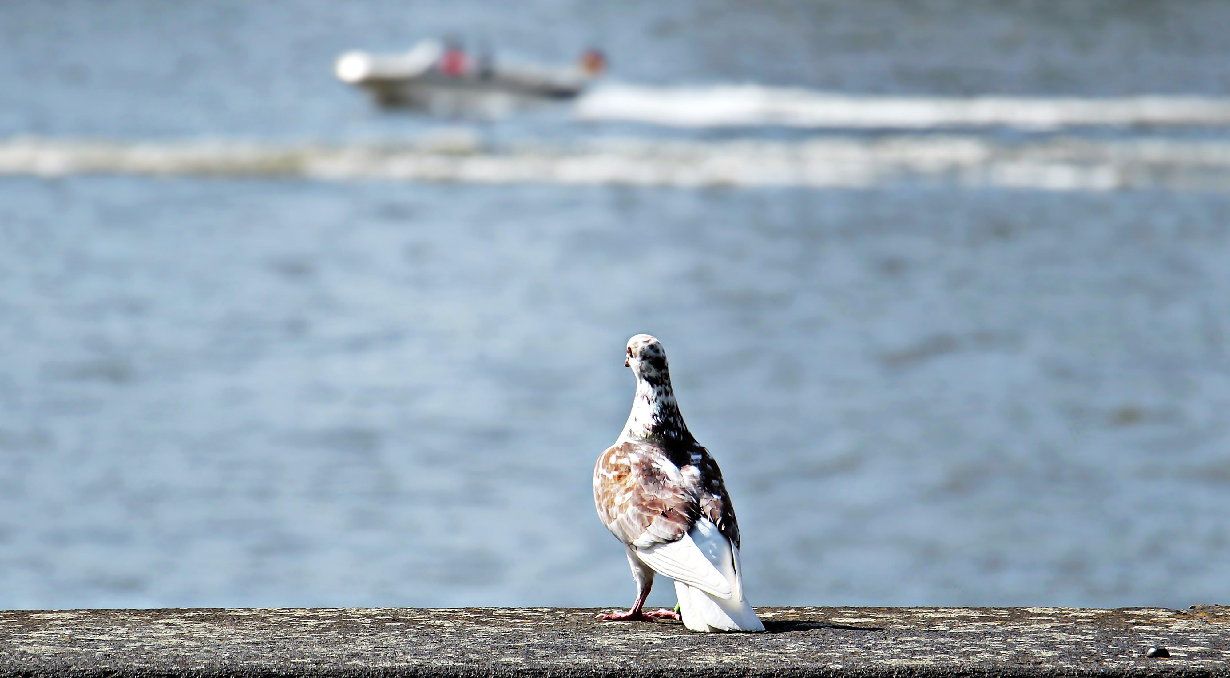 Free stock photo of animal, atmosphere, being alone, bird