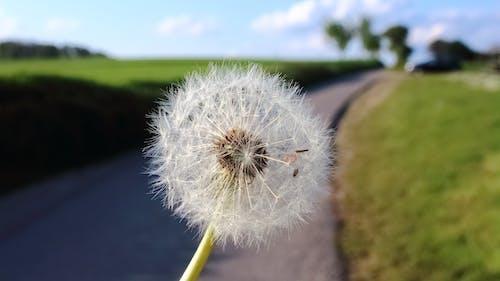吹, 夏天, 夏季, 天性 的 免费素材照片