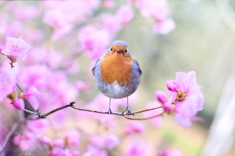 beautiful, bird, bloom