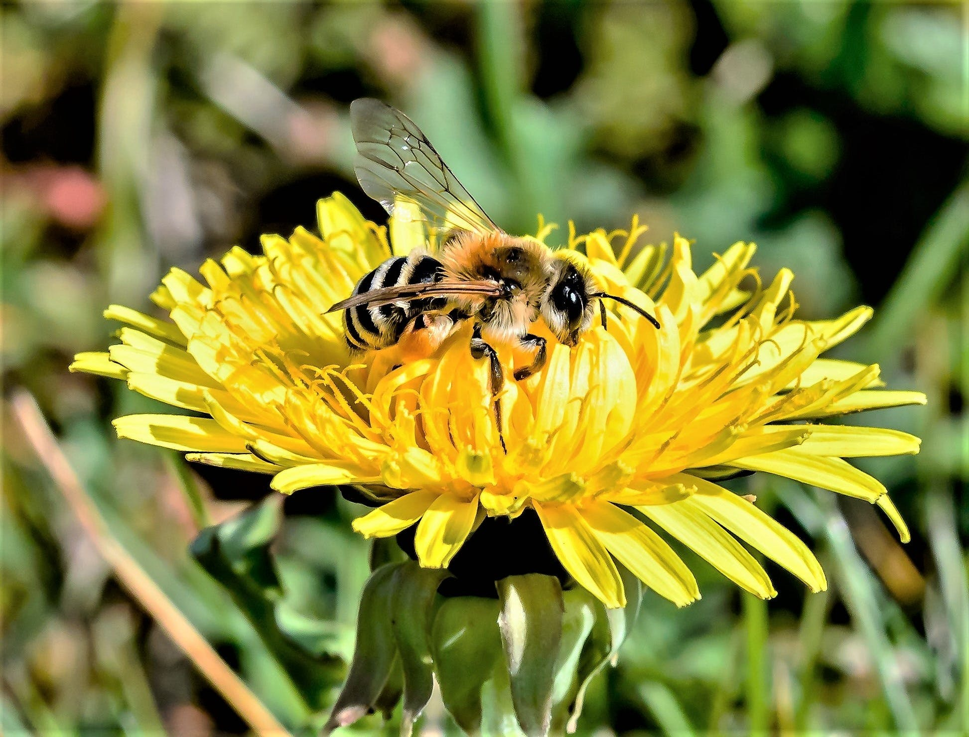 Selective Focus Photography of Bee on Yellow Petaled Flower