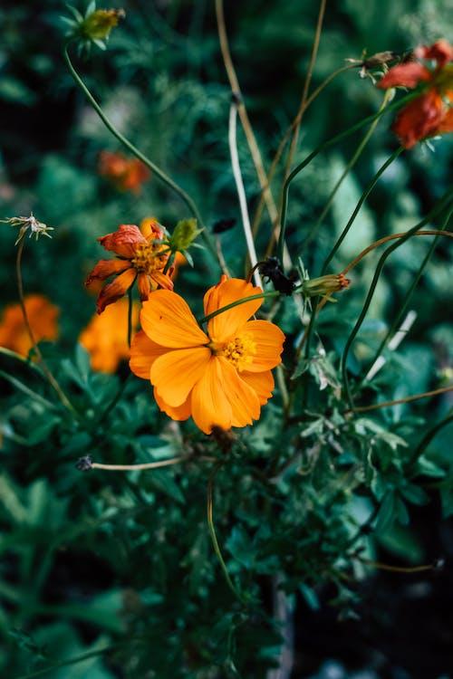 Close-Up Shot of an Orange Flower in Bloom