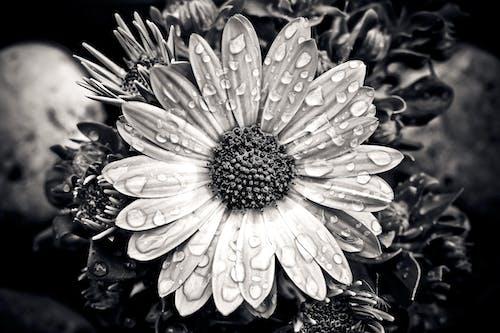 Bahçe, bitki, büyüme, çiçek içeren Ücretsiz stok fotoğraf