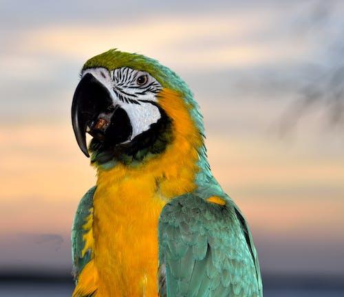 깃털, 날개, 노란색, 녹색의 무료 스톡 사진