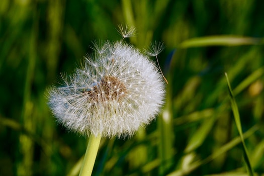 Free stock photo of nature, grass, petals, plant