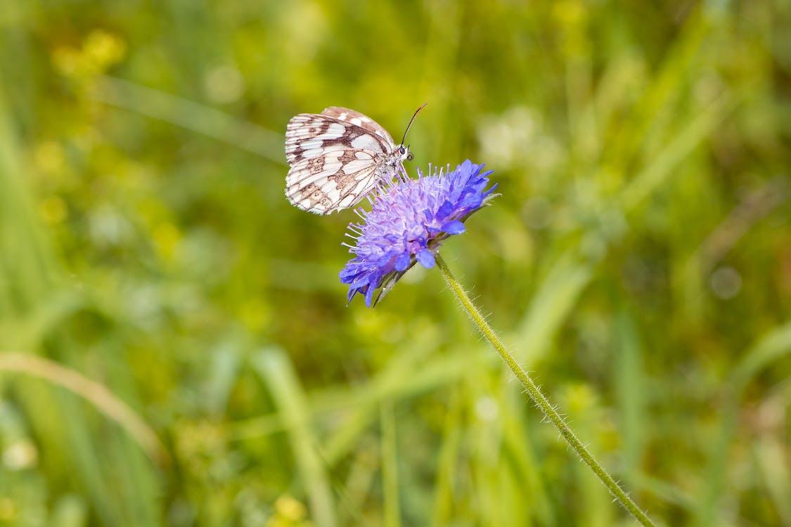 бабочка, дикая природа, дикий